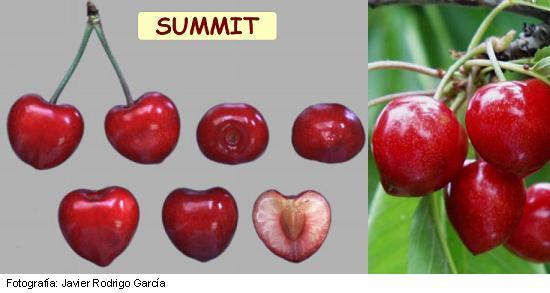 Summit cherry